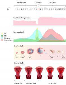 Fertility Reflexology Training Course